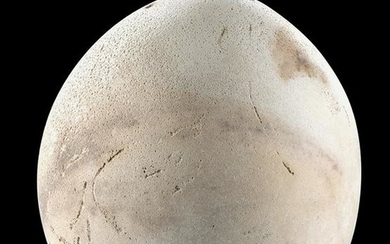 Rare Egyptian / Nubian Ostrich Egg Vessel - Intact!