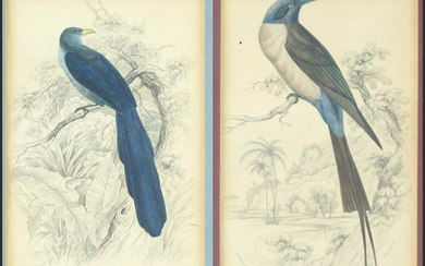 Two 19th Century Hand-Colored Prints of Birds.