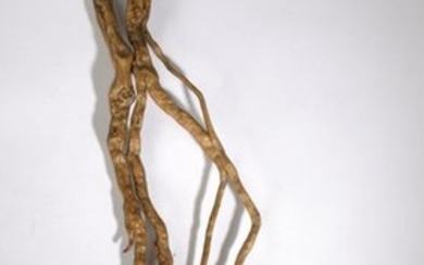 A cane taken from the root of a...