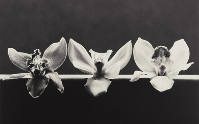 Robert Mapplethorpe, Orchids
