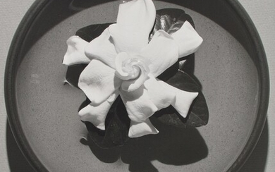Robert Mapplethorpe, Gardenia