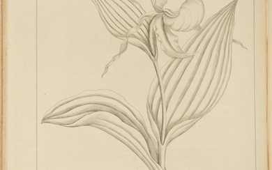 Barton, William Paul Crillon. A rare uncolored issue of an important American flora, richly illustrated