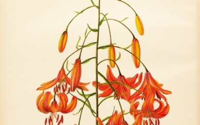 ELWES | A Monograph of the Genus Lilium, 2 volumes, 2 further parts, 1877-1962