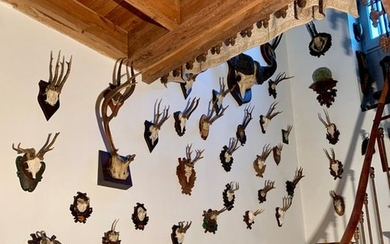 Set of about thirty trophies of ibex, elk,...