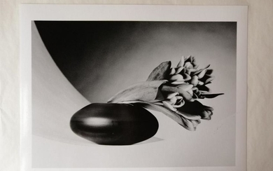 Tulips - Robert Mapplethorpe