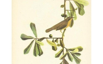 c1946 Audubon Print, #24 Maryland Yellow-Throat