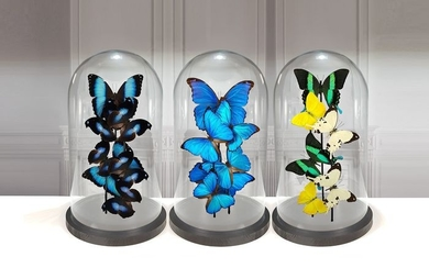 Finest Set quality mixed Butterflies under 3 Large Glass Domes - Various Species - 40×23×23 cm