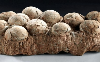 Therizinosaurus Egg Clutch, 70 to 120 Million Years Old