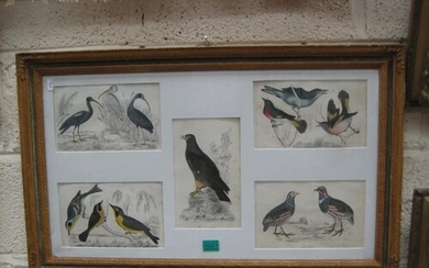 Framed Collection of Hand Coloured Bird Prints from Goldsmit...