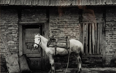 William F. Lemke (WI, 20th Century), White Horse, Yugoslavia, 1986, Gelatin Silver Print EV1DN