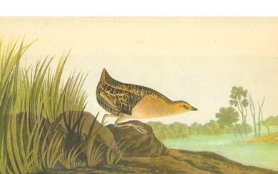 c1946 Audubon Print, #329 Yellow Rail