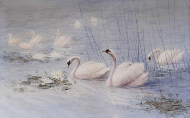 Katsuzo Takahashi (19th Cent. Japanese) Swans in Pond