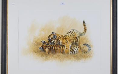 Matthew Hillier - Two Tigers at Play, late 20th century watercolour, pastel and pencil, signed in pe