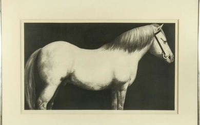 Joseph Piccillo Horse Study Pencil & Charcoal
