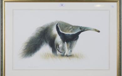 Matthew Hillier - 'Giant Anteater', late 20th century watercolour, pastel and pencil, sign