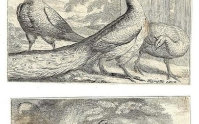 17th C Old Master Etchings Peacocks Mariette
