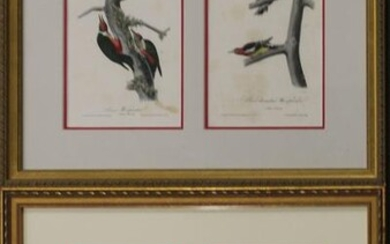 After John J. Audubon (AM 1781-1851)