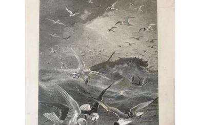 19thc Engraving, Gleaners Of The Sea