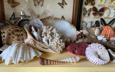 Important lot of shells, corals, sea urchins, sponges...