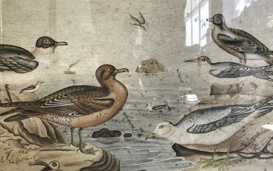 Signed Chinese Hand Colored Seagulls