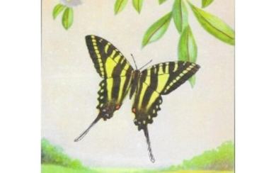 1920's Zebra Swallowtail Butterfly Color Lithograph