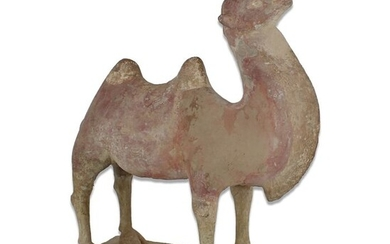 Ancient Chinese, Tang Dynasty Pottery Statuette of a camel - 260×240×0 mm - (1)