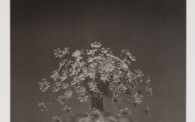 MAPPLETHORPE, ROBERT (1946-1989) Queen Anne's Lace in vase.
