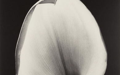 Robert Mapplethorpe, Calla Lily
