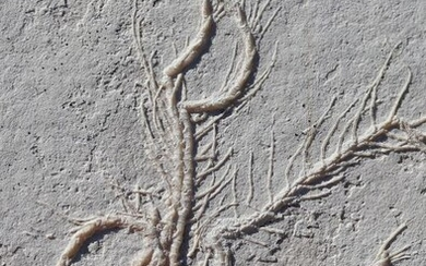 Extraordinary fossil ink - Well centered on natural plate without added color - Comaturella formosa - 13.1×9.1×1 cm