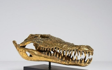 Saltwater Crocodile Skull in Polished Bronze