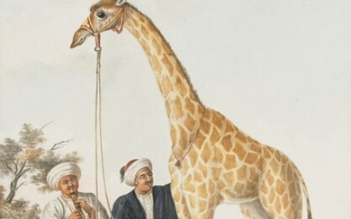 Charles Frederick de Brocktorff (1775–1850), Camelopard - a present from the Pacha of Egypt to the King - at Malta on its way to England