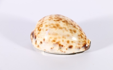 18th century Scottish cowrie shell snuff mull with hinged si...