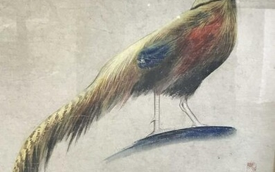 Signed Chinese Hand Colored Bird