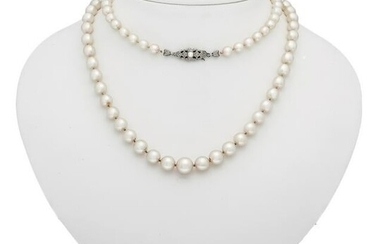 Akoya necklace with buckl