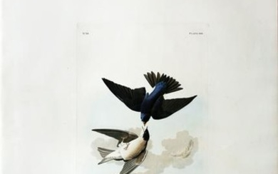 Audubon Aquatint, Green Blue, or White Bellied Swallow