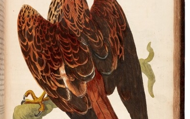 PENNANT | The British zoology, 1761-1766