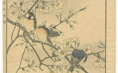 Keinen's Flowers and Birds: 13. Cherry Blossoms