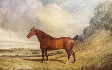 19th Century Oil on canvas of a horse in a field. 62 x 49 cm...