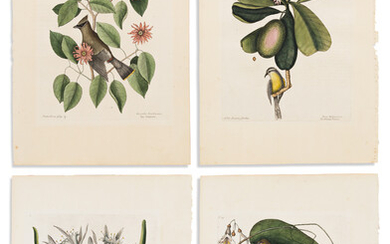 CATESBY MARK 8 hand colored engraved plates