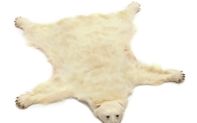 A head mounted polar bear (ursus maritimus) with claws. Artificial teeth. L. nose to tail 208 cm. W. between front legs 210 cm.