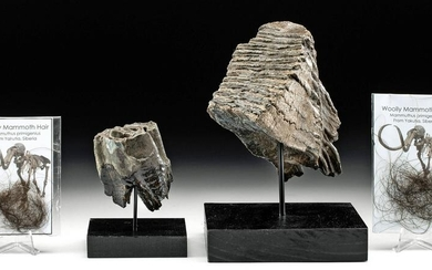 Mammoth Tooth, Wooly Rhino Tooth, & Mammoth Fur