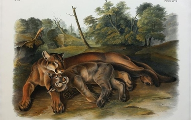 Audubon Lithograph, The Cougar (Female and Young)