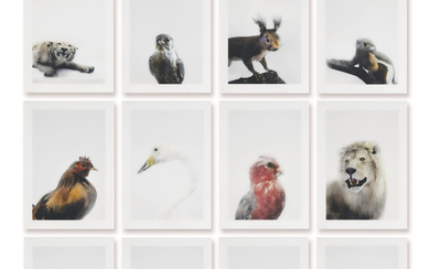 ROBERT ZHAO (B. 1983), Soon Bo's Cold Room and Shelves Series: Raffles Tiger, Falcon, Chinese Greater Bushy Ear Comerolat, Chicken, The Japanese White Sided Tooch, Lesser White Nosed Monkey, Swan, Society Parrot, Barbary Lion, River Lion, Timolo...