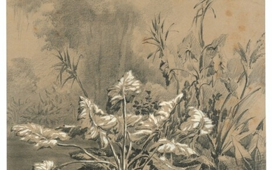 Auguste Borget (1809-1877), A study of aquatic plants, Luzon (Philippines), and two other landscapes, probably views taken in the Philippines