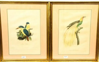 Pair Antique Hand Colored Framed Bird Engravings