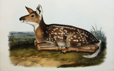 Audubon Lithograph, Common American Deer (Fawn)