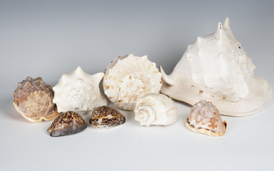 A large collection of seashells, including cowrie, conch, abalone, cone and scallop.