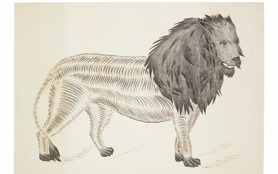 Pennsylvania School, 19th Century, A Calligraphic Drawing of a Lion