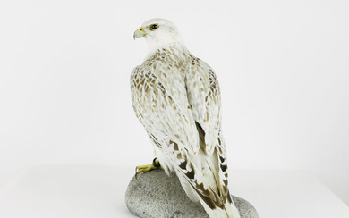Museum Quality - Greenland Falcon set on artificial rock - Falco rusticolus - with full CITES Article 10 - 40×22×35 cm - 1564/2016