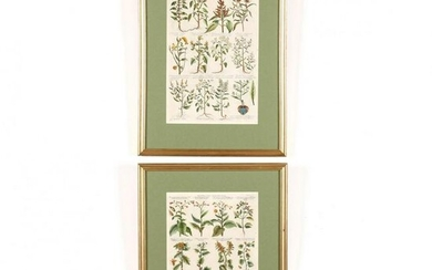 Pair of Early Botanical Engravings by Michael Burghers